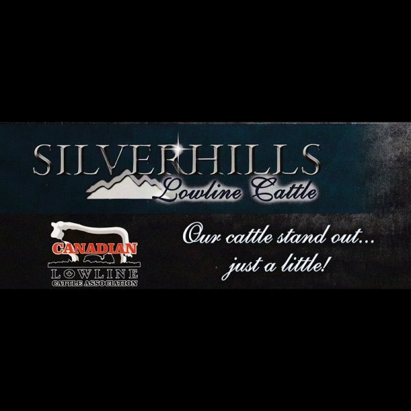 Silver Hills Locally Grown Beef
